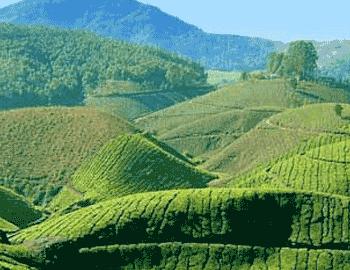 Enchanting Kerala Holiday Package